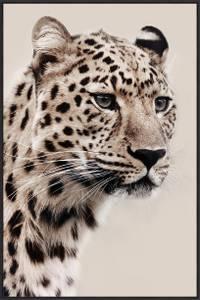 Bilde av Bilde Leopard beige 60x90cm